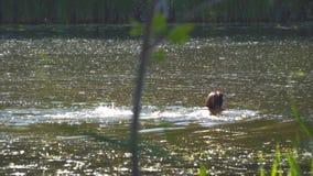 Natación de la mujer joven en un traje de baño en el río almacen de video