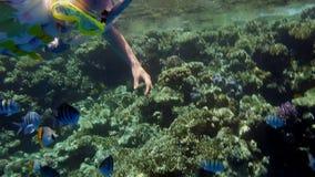 Natación de la niña en el coral con los pescados coloridos almacen de metraje de vídeo