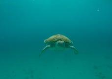 Natación de la tortuga de mar en el océano Fotos de archivo libres de regalías