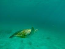 Natación de la tortuga de mar en el océano Imágenes de archivo libres de regalías