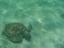 Natación de la tortuga subacuática Imagen de archivo