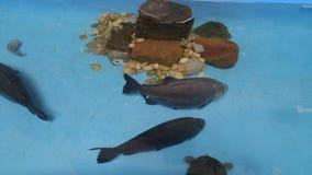 Natación de los pescados fotografía de archivo