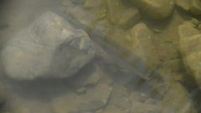Natación de los pescados en el río almacen de video