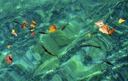 Natación de los pescados en la onda de agua fotografía de archivo