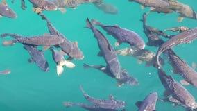 Natación de los pescados en la piscina Fondo del agua azul metrajes