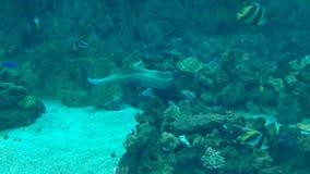 Natación de los pescados subacuática almacen de metraje de vídeo