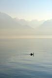 Natación del cisne en el lago Lemán Fotos de archivo libres de regalías