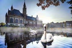 Natación del cisne en niebla del otoño