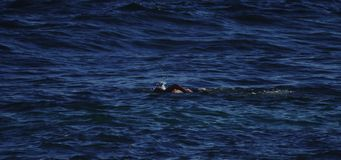 Natación del hombre en el océano almacen de metraje de vídeo