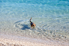 Natación del perro en el mar Fotografía de archivo libre de regalías