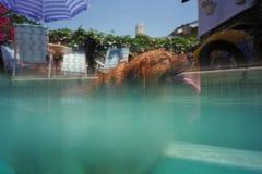 Natación del perro en piscina Foto de archivo libre de regalías