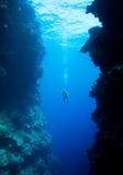 Natación del zambullidor entre los acantilados subacuáticos Foto de archivo