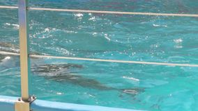 Natación entrenada del delfín metrajes