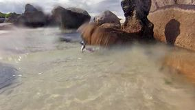 Natación subacuática de la playa de Boulder almacen de video