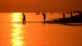 Nataci?n de los pares en el mar en la puesta del sol metrajes