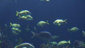 Nataci?n de los pescados debajo del agua metrajes