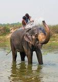 Natación del elefante Fotografía de archivo libre de regalías