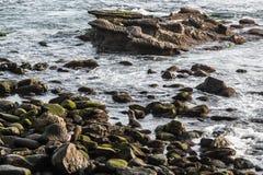 Natación del sello en medio de las rocas en la ensenada de La Jolla Imagenes de archivo