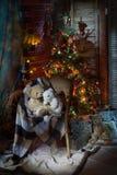 Natal ainda vivo Imagens de Stock Royalty Free