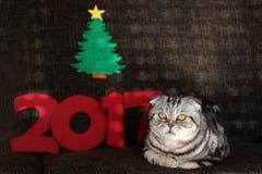 Natal bonito e anos novos da cena/2017 Fotos de Stock