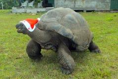 Natal em Seychelles fotos de stock royalty free