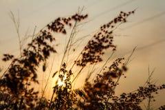 natal gräs Royaltyfri Bild