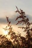 natal gräs Arkivfoton