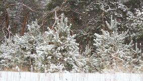 Natal nevado da floresta do inverno vídeos de arquivo