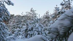 Natal nevado da floresta do inverno video estoque