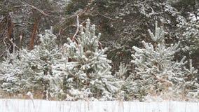 Natal nevado da floresta do inverno Foto de Stock