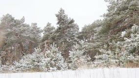 Natal nevado da floresta do inverno Imagens de Stock Royalty Free
