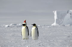 Natal no gelo Fotografia de Stock