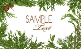 Natal Pinecone temático e árvore verde Branc Fotografia de Stock Royalty Free