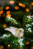 Natal Robin Bird na árvore do Xmas Imagem de Stock Royalty Free