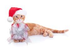 Natale Cat Gift Fotografia Stock