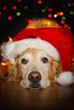 Natale del cagnolino Fotografia Stock