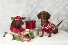 Natale del cane del bassotto tedesco Immagini Stock Libere da Diritti