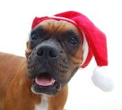 Natale del cane del pugile Immagini Stock Libere da Diritti