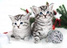 Natale del nuovo anno di due gattini Fotografie Stock