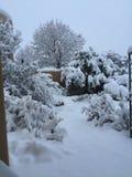 Natale di Snowy nella scena del deserto Fotografie Stock
