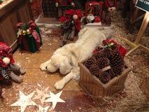 Natale felice Fotografie Stock