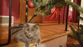 Natale Kitty Immagine Stock