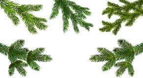 Natale, nuovo anno Metta dal ramo realistico verde cinque del primo piano del pino o dell'abete Ramificato fuori Isolato su bianc royalty illustrazione gratis