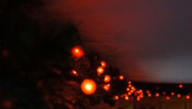 Natale rosso Berry Lights Fotografia Stock Libera da Diritti