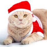Natale Santa Cat Fotografia Stock Libera da Diritti