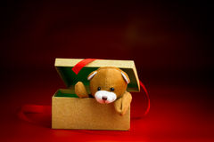 Natale Teddy Popping Out di un contenitore di regalo Fotografie Stock Libere da Diritti