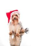 Natale triste da solo Fotografia Stock Libera da Diritti