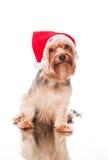 Natale triste da solo Fotografia Stock