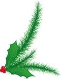Natale verde illustrato agrifoglio e rami dell'ago del pino Fotografia Stock