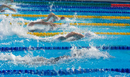 natation Photos libres de droits